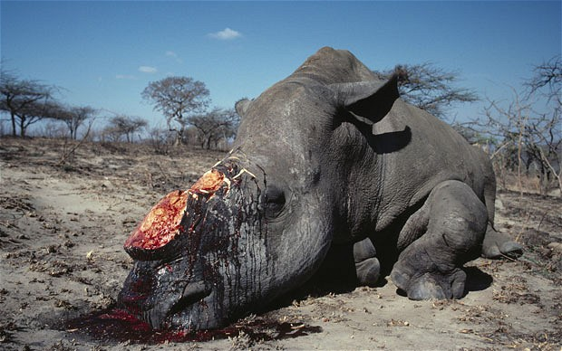US cracks down on wildlife poaching